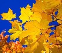 Проект «Золотая осень» от Сбербанка - глобальный ценопад до 50%